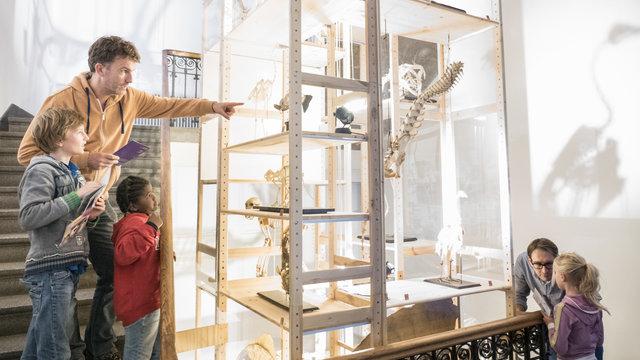 Skeletten in vitrines bij Universiteitsmuseum Utrecht