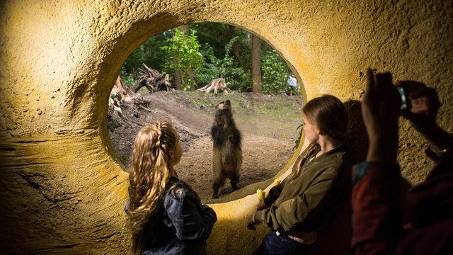 Kinderen kijken naar das in het dassenhol in DierenPark Amersfoort