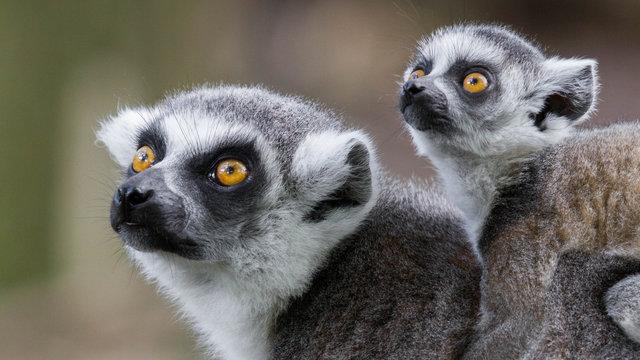 Moeder en jong dier bij DierenPark Amersfoort