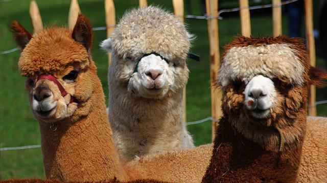 Bekijk allerlei leuke dieren tijdens de voorjaarsfair.