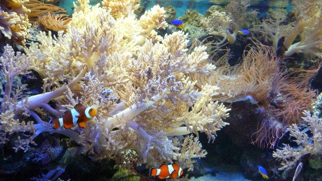 Koraal, planten en vissen bij Aqua Zoo.