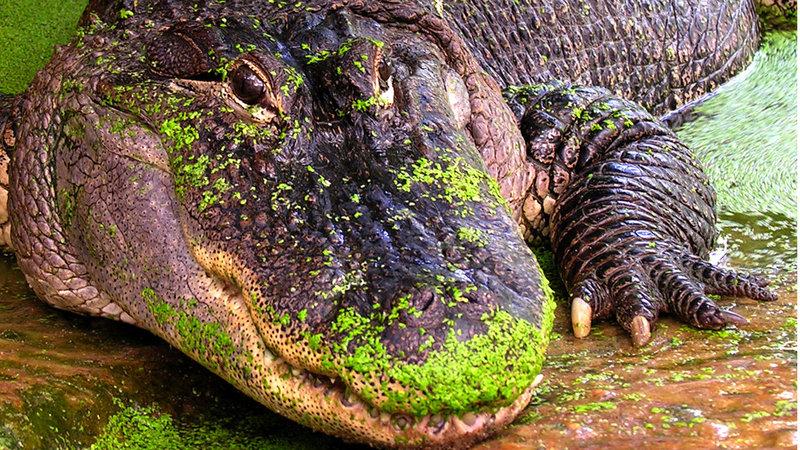 Reptielen Zoo Iguana