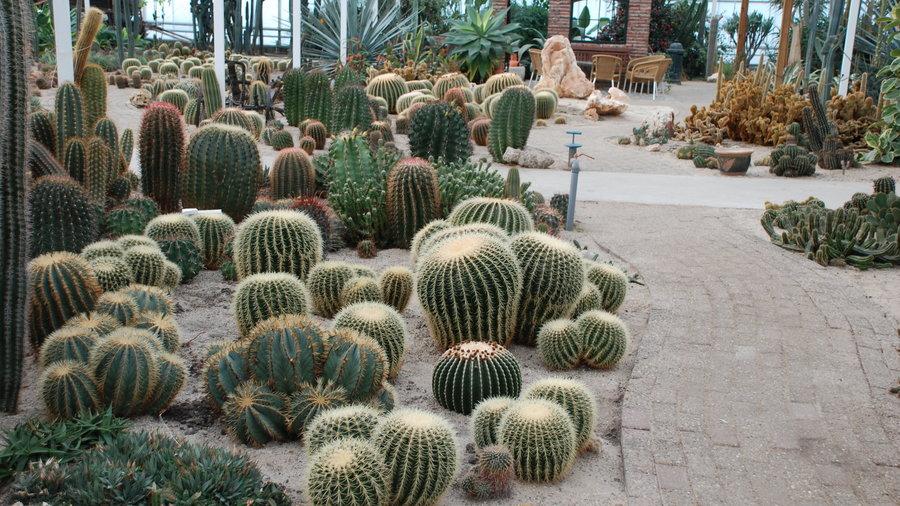 Cactus Oase met veel verschillende cactussen