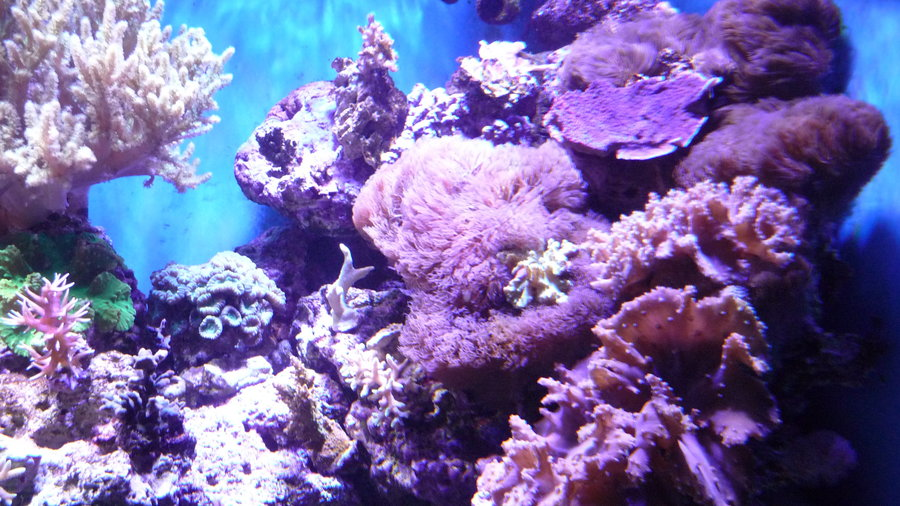 Bijzondere zeeplanten in allerlei kleuren.