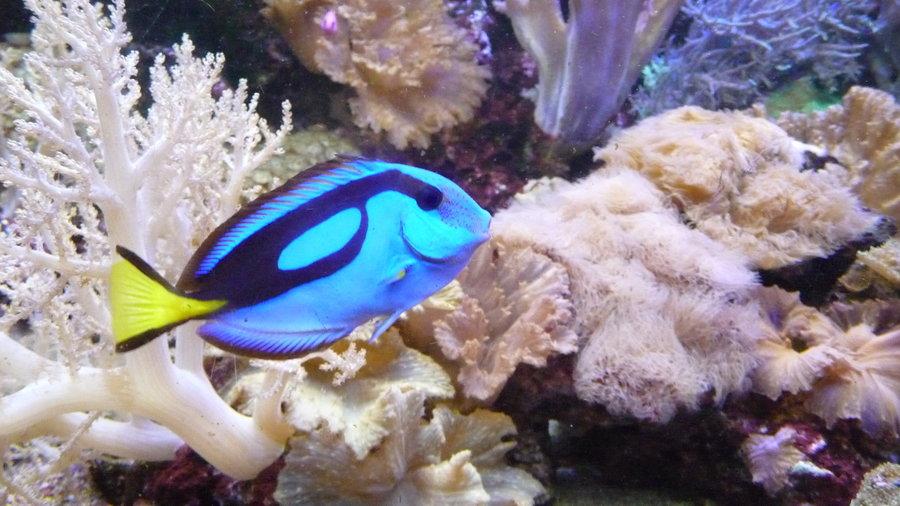 Blauwe vis tussen bijzondere zeeplanten in Aqua Zoo.