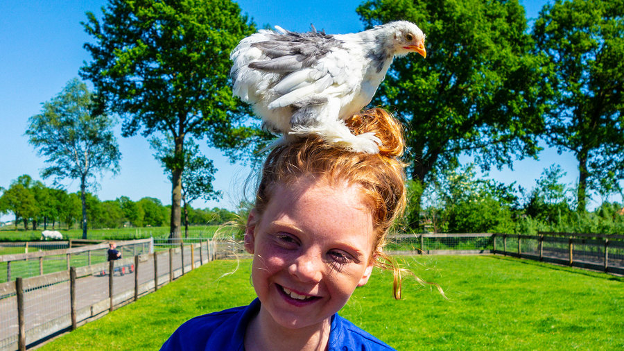 Meisje met kip op haar hoofd