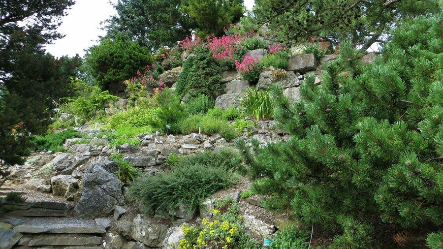 Rotswand met begroeiing