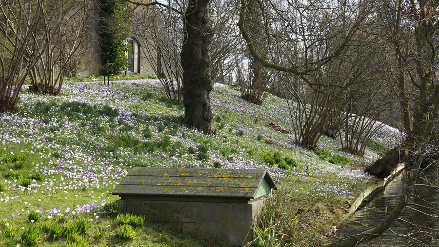 Heuvel met bomen en gekleurde bloemen