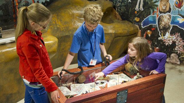 Kinderen spelen een interactief spel met planten en dieren