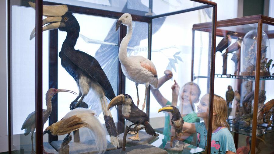 Opgezette vogels in het Universiteitsmuseum Utrecht