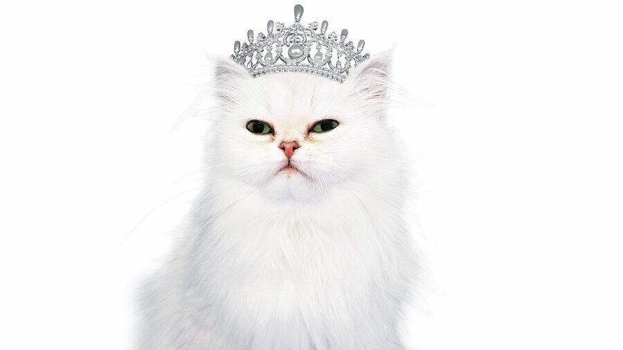 Kat met diadeem
