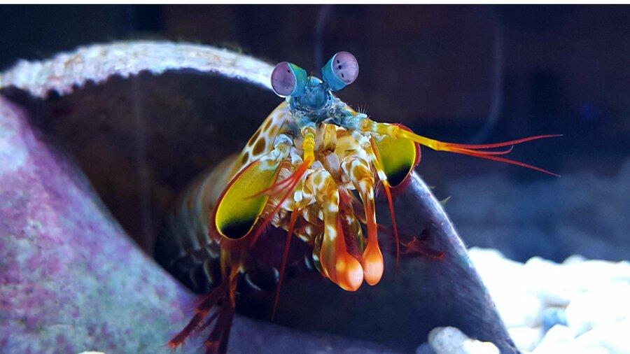 Bijzondere zeedieren in Aqua Zoo Leerdam