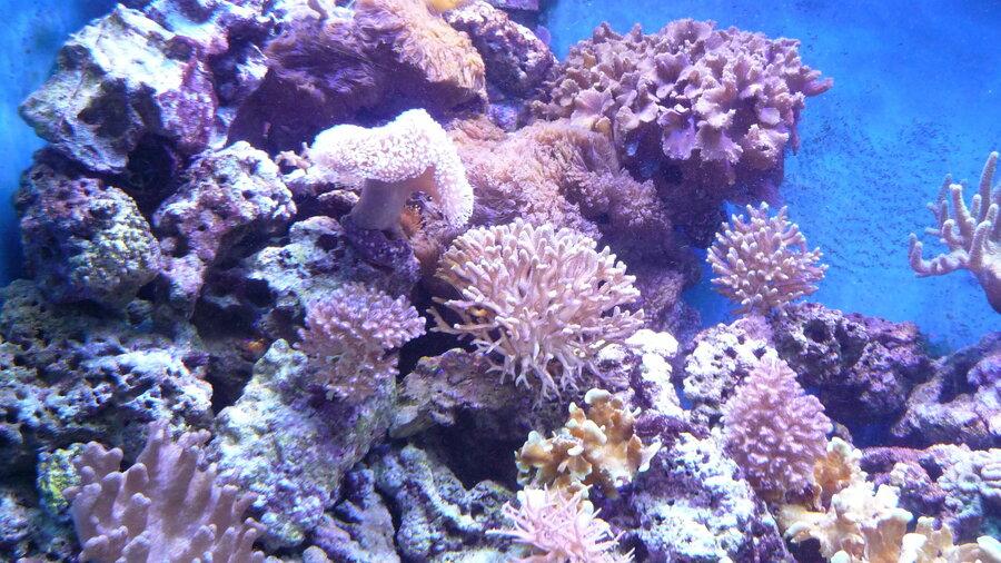 Kleurrijke koralen in het water.