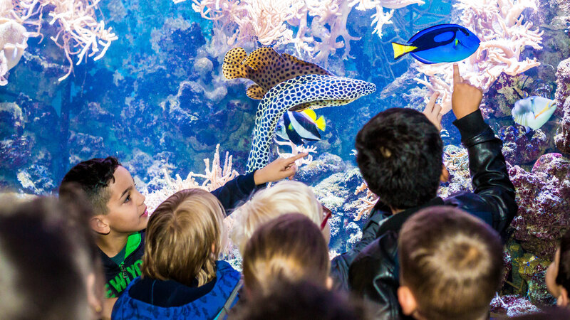 Het Arsenaal: piratenpark en zeeaquarium
