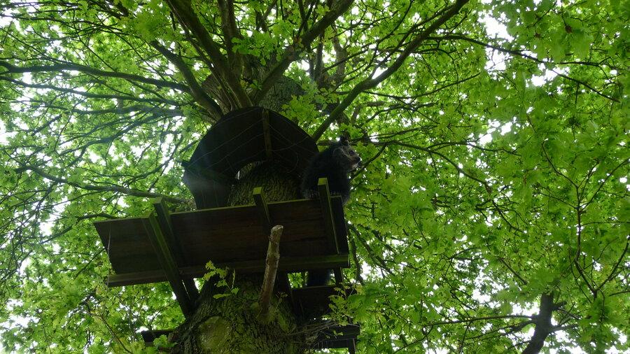 Beer in boom bij Taman Indonesia