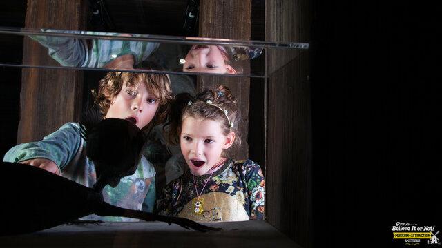 Kinderen in Ripley's Amsterdam