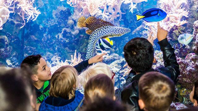 Kinderen wijzen naar vissen in aquarium