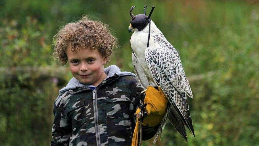 Jongen met roofvogel op handschoen