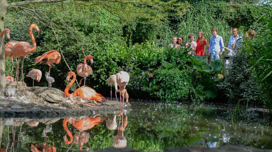 Flamingo's in Vogelpark Avifauna