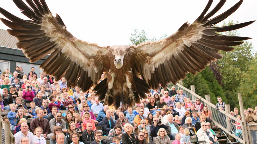 Vogeldemonstraties in Vogelpark Avifauna