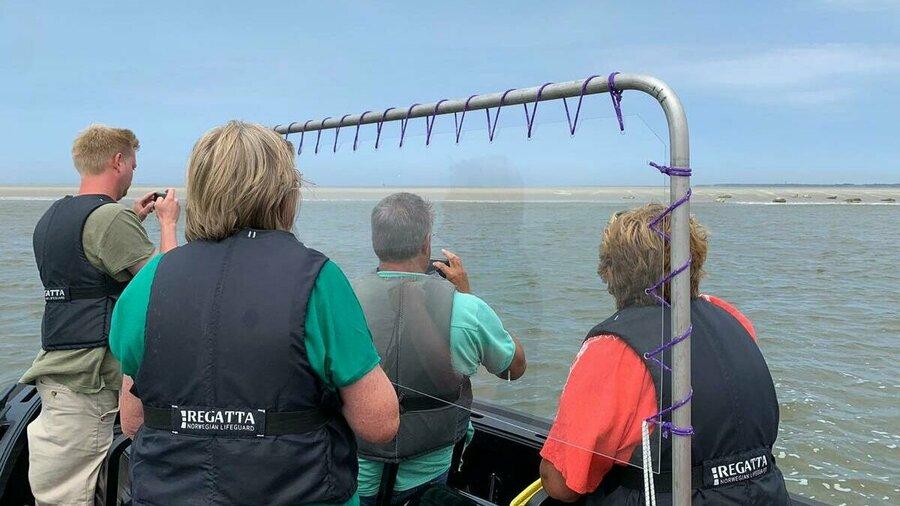 Vaar mee op een rescueboot van Beleef Lauwersoog en zeehonden te spotten in het wild