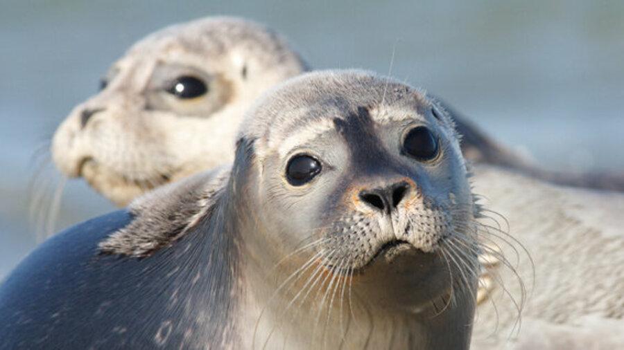 Vaar mee op een rescueboot van Beleef Lauwersoog en spot zeehonden in de Wadden