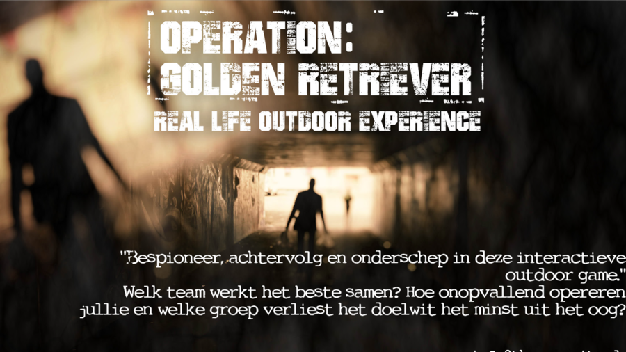 Real life outdoor experience operation: golden retriever